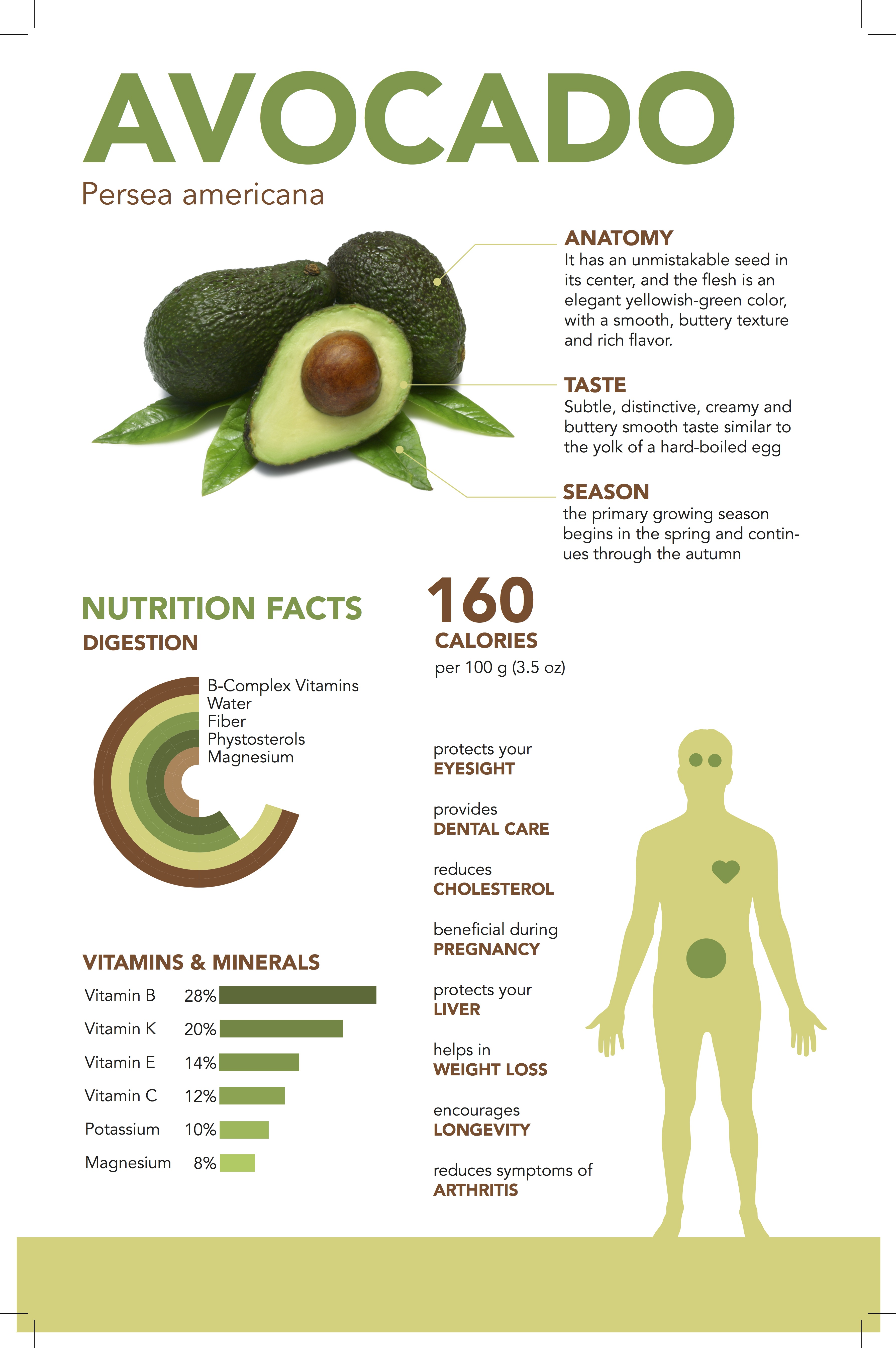 Avocado Infographic Page 1