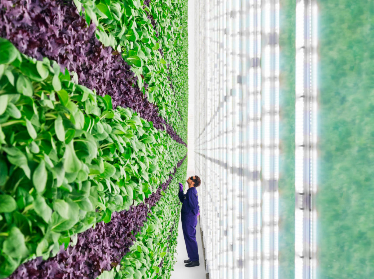 A vertical farm at Plenty